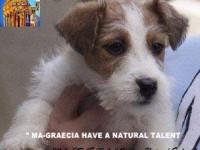 Allevamento-jack-russell-terrier-MAGNA-GRAECIA-2.jpg