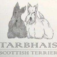 tarbhais-allevamento-scottish-terrier.jpg