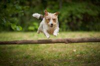 dog-click-pet-photography-3.jpg