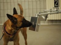 medical-detection-dogs-italy-1.jpg