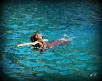 Allevamento_Labrador_Retriever_Dell_isola_Azzurra_2.jpeg
