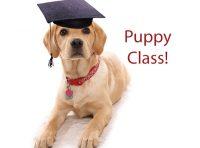 silverdog-centro-cinofilo-educatore-istruttore-cinofilo-certificato-venezia-2.jpg