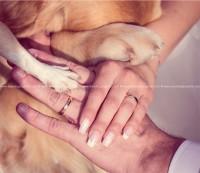 www.weddingdogsitter.com-matrimonio-con-il-cane-como-svizzera-127.jpg