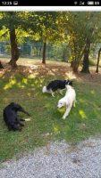 la-coda-blu-pensione-per-cani-4.jpg