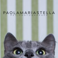 paola-stella-pet-photographer.jpg