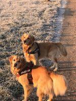 milano-dog-sitter-4.jpg