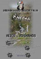 siberian-husky-rescue-italia-1.jpg