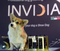 cosmetici-professionali-per-cani-invidia-italia-3.jpg