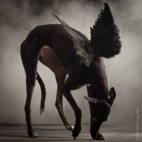 Paul_Croes_Animal_Photography_2.jpeg