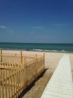 Scooby.Doo-Beach-Spiaggia-per-Cani-Senigallia-4.jpg