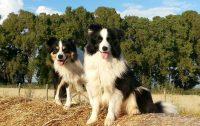 Barking_Dogs_Asilo_per_Cani_Roma_3