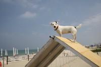 Scooby.Doo-Beach-Spiaggia-per-Cani-Senigallia-1.jpg