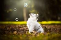 Cecilia-Zuccherato-Photography-1.jpg