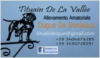 Tituain_de_la_Valleè_Allevamento_Dogue_de_Bordeaux.jpg