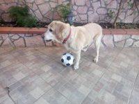 cane-al-sicuro-dog-sitter-barcellona-milazzo-2.jpg