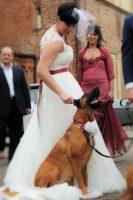 Athena_Dog_Sitter_per_Matrimoni_2.JPG
