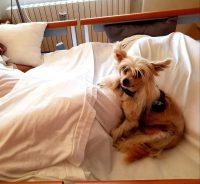 animal-touch-pet-therapy-e-stimolazioni-sensoriali-2.jpg