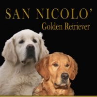 allevamento-golden-retriever-san-nicolo.jpg