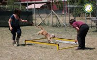Dogs-&-CO.-Academy-1