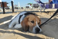 Beach-33-Spiaggia-per-Cani-Rimini-2.jpg