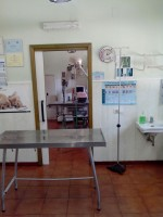 veterinary-day-hospital-ambulatorio-veterinario-catania-auteri-dott-davide2.jpg