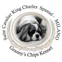 Granny's_Chips_Kennel_Allevamento_Cavalier_King_Charles_Spaniel.jpg