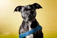 notorious-dog-pet-photography-4.jpg