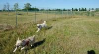 pensione-per-cani-giardino-di ecuba-2.jpg