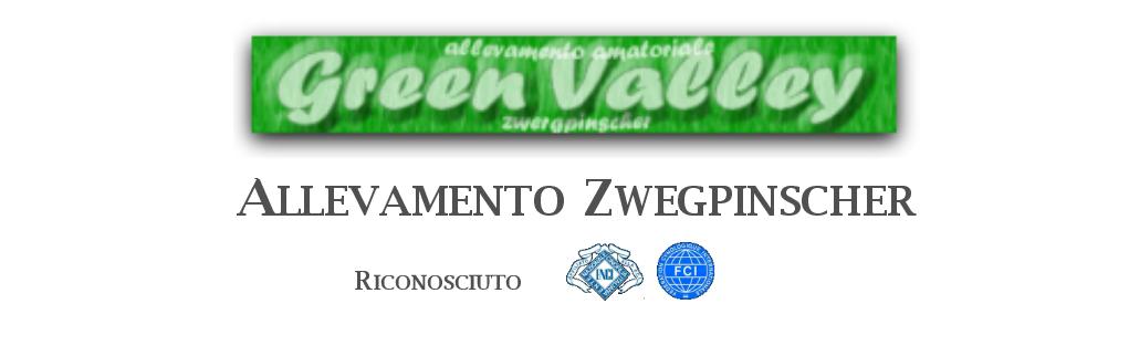 Green-Valley-ALLEVAMENTO-ZWEGPINSCHER-il-mio-cane