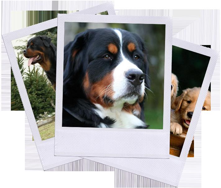 polariod-con-cani