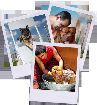 polariod-con-cani-aziende