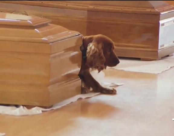 il cane si accuccia vicino alla bara del suo padrone