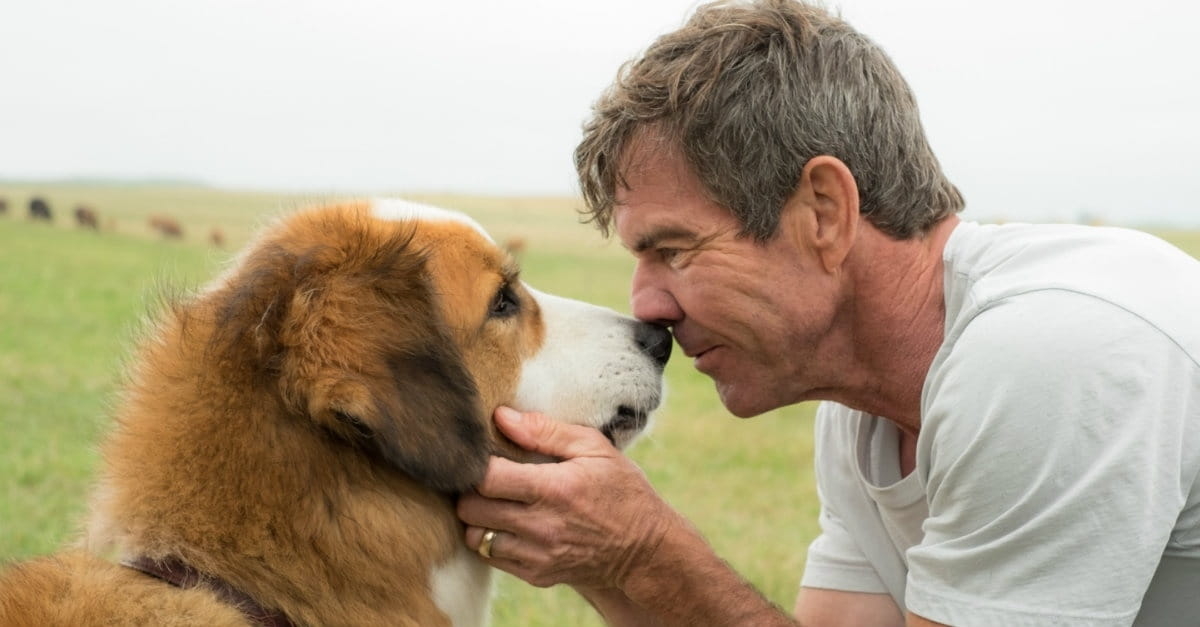 parlare al cane