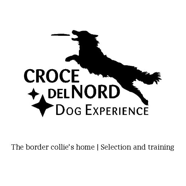 Croce-del-nord.-dog-experience
