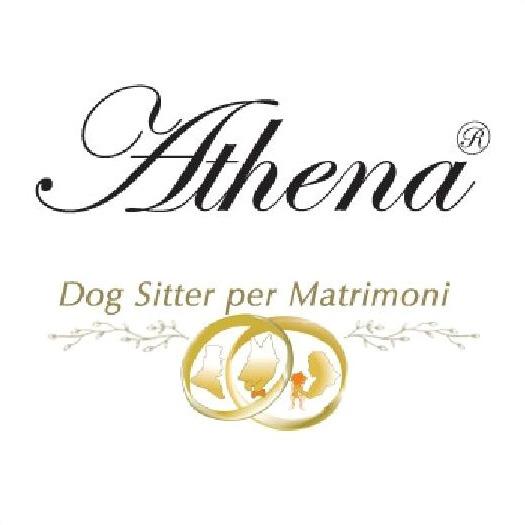 athena-dog-sitter-per-matrimoni